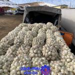پروژه ارسال پیاز به مقصد موصل عراق